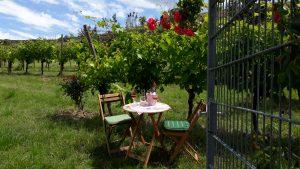 Picknick im Weingut Schätzle